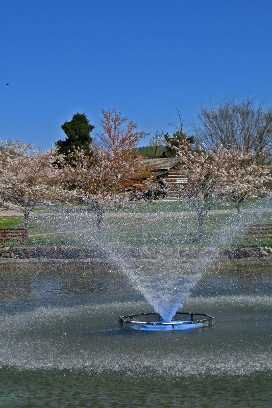 Janssen Park In Spring 5