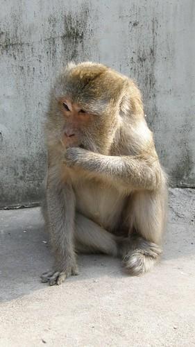 48.猴子大喇喇的吃起東西