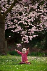Onder de lentebloesem