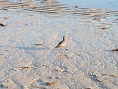 100_2100 (Seraphim2581) Tags: beach mexico rockypoint peasco