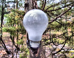 Here's Another Bright Idea... (BACKYard Woods Explorer) Tags: selfportrait lightbulb reflections woods trashbit