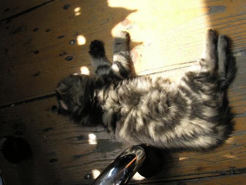 Miután minden piszkot összeszedet, jólesően alszik.