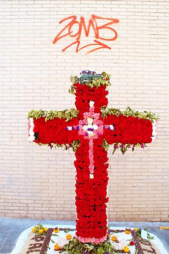 cruz-mayo
