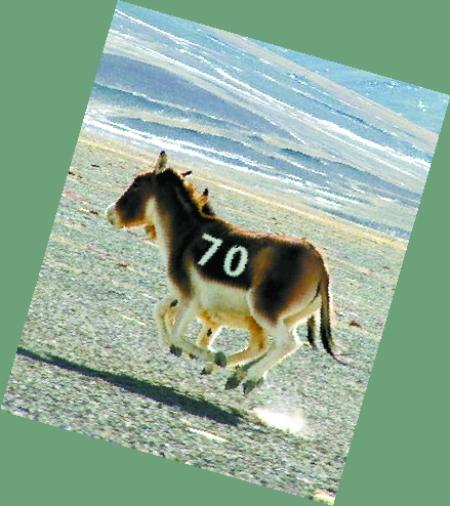 70KMH Horse