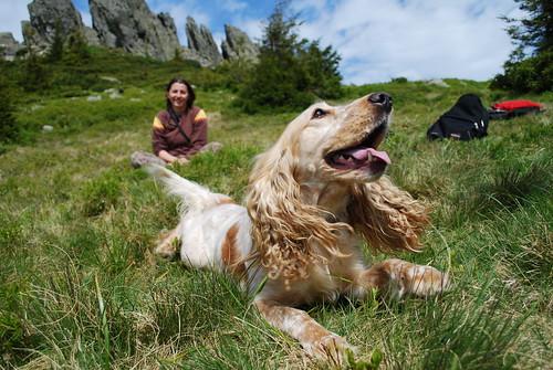 Happy dog again