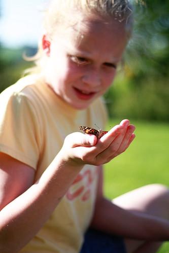 butterflies 033