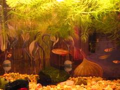 xmas fish aquarium tank fishtank