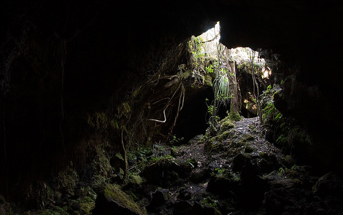 Entry of one of the lava caves - Rangitoto island, NZ