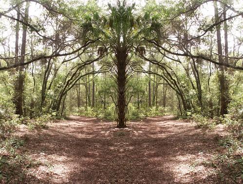 Mirror Trail