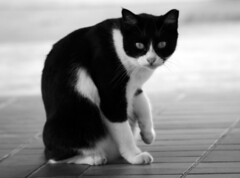 The cat at the bus-stop. (Rusdy Rosli) Tags: bw cats dof bokeh monochromatic felines canon400d