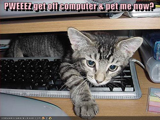 3694622642 417d7bd58b LOL Cats in your office: I Can Haz Work?