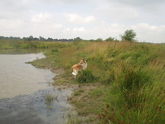 am Teich (manopet) Tags: dog collie hund mano meldorf torja