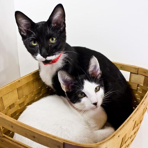 Basket of Kittehs