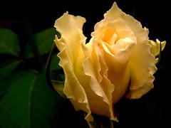 Por outro ngulo... (...anna christina...) Tags: plant flores nature brasil plantas natureza annachristina mygearandme annachristinaoliveira