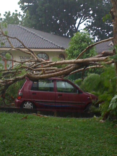 Kereta dihempap pokok sewaktu hujan lebat