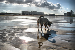 Lucy (Fonk) Tags: sea dog chien mer beach lucy belgium belgique belgi zee oostende plage hdr griffon ostende