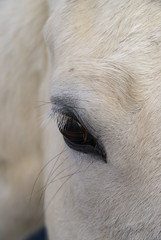 eye of the beholder (simplegiftsphoto) Tags: horses ourkentucky
