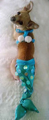 Zoey the Chihuahua as Mermaid (ozfan22) Tags: dog mermaid chihauhua dogsinclothes dogincostume