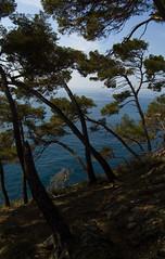 Pini Marittimi (Sisto Nikon - CLICKALPS PHOTOGRAPHER) Tags: panorama nikon mare liguria natura portofino paesaggi cultura paesaggio panorami sisto appenninoligure sisti provinciadigenova golfodeltigullio