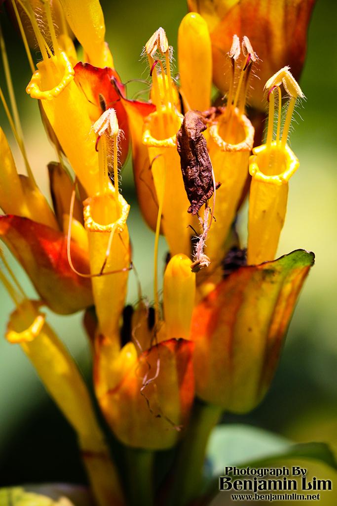 butterflyfarm_flower04