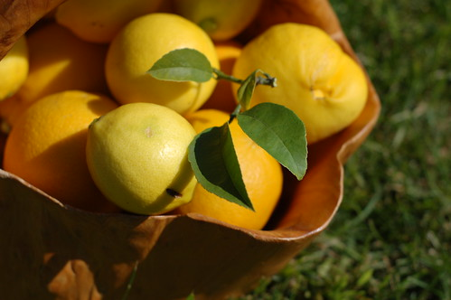 Basket of bergamots and meyer lemons