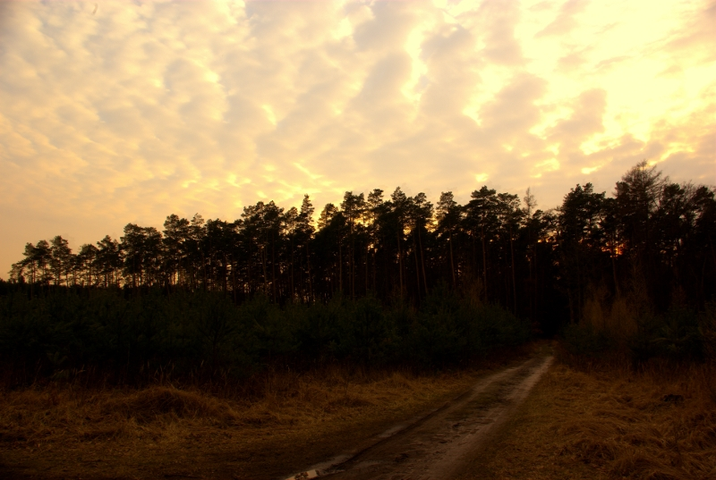 Sunset upon a forest