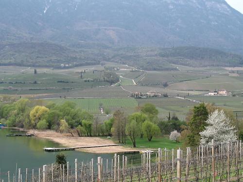 Blick vom Kalterer See in die hügelige Weinlandschaft in Richtung Dorfkern von Kaltern