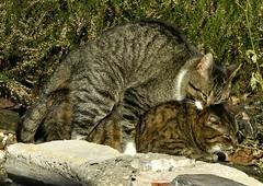 Ooh! (joeke pieters) Tags: nature cat kitten kat poes