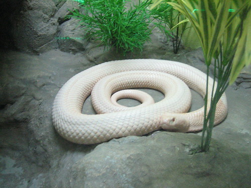 На ферме разводят самых ядовитых змей в мире
