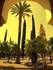 PATIO MEZQUITA DE CRDOBA 1 (Bocngel (Jorge Navarro)) Tags: travel tourism torre andalucia viajes ciclista mezquita viatge crdoba turismo arco cipreses turisme ciprs