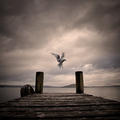 between one and two (sadaiche (Peter Franc)) Tags: two lake motion bird square one pier jump blurry seagull flight poop brava between idream poopooo poooo anawesomeshot pooooo agghhsomuchpoo robertsartgallery