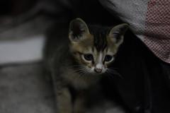 Do you like me?? (air maxx) Tags: china wallpaper hk dog pet cute cat hongkong good best meow lovely