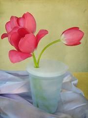 866. (agajag) Tags: life red flower spring still tulip