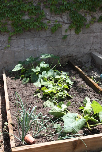gardening 014.JPG