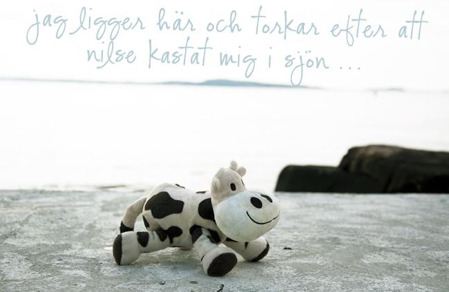 ko i sjön