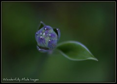 From Out of NoWhere (Wonderfully Made Images) Tags: flowers nature floral texas naturallight inspiredbylove photographyrocks canon40d macromarvels newniftyfiftylens