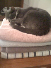 IMG_0298 (Patrick on Hope Street) Tags: grey towels greycat