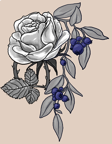 rose tattoo design. Blueberry Rose Tattoo drawing