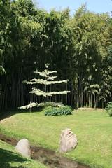 Tree in La Bambouseraie (Shropshire Bogtrotter) Tags: labambouseraie