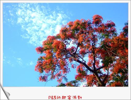 你拍攝的 DSCF0504.jpg。