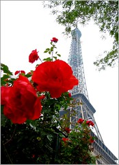 La Tour et Les Roses (Kurlylox1) Tags: flowers red roses paris bokeh eiffeltower perspective icon toureiffel abigfave platinumphoto