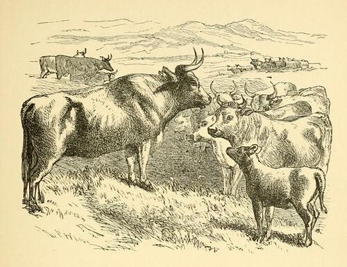 Lanius et Boves