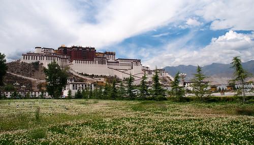 Lhasa 37