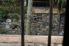 Rinchiuso nella mia gabbia osservo la natura (sudandolamerica) Tags: brazil rio de mac janeiro jesus corcovado da cristo mam niteroi mirador arcos lapa