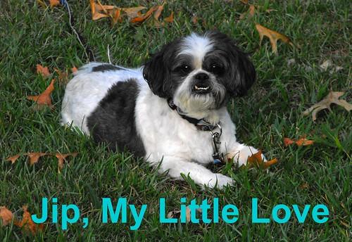 Jip Love 072909