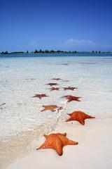 Alex ortiz tags beach azul starfish cuba playa explore naranja