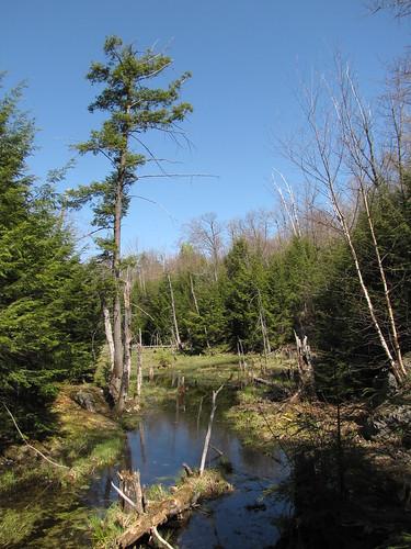 GAT pond
