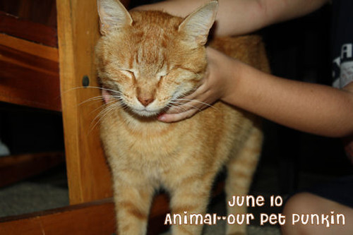 June 10--Animal