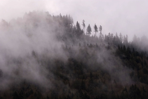 Fog covered hill, Nooksack river