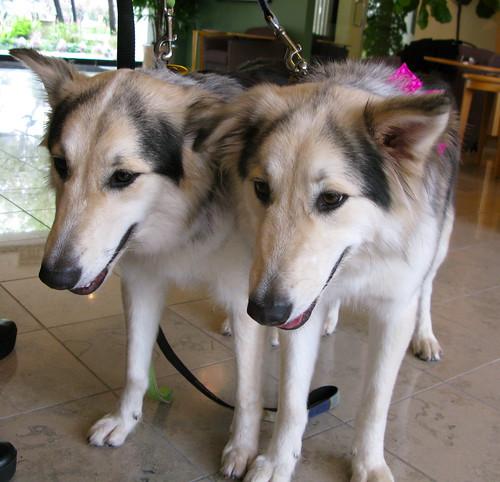 Cute Clones